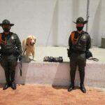 'Gold', el canino antinarcóticos logra detectar una encomienda con estupefacientes en Duitama